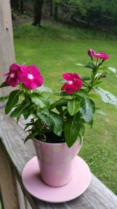 Vinnie (Vinca Minor)
